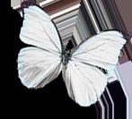motyl-dolni-1