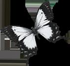 motyl-horni-3